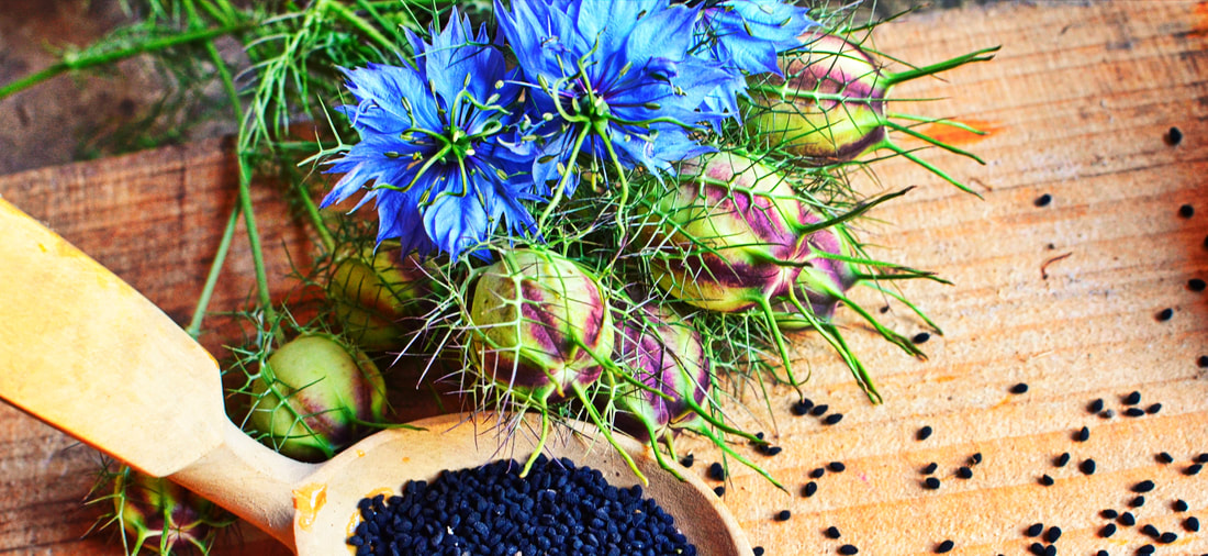Nigella Sativa – Scientific Rationale Related to its Therapeutic